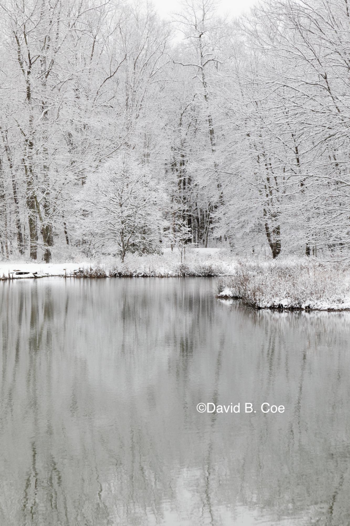 Pond in Snow I, by David B. Coe