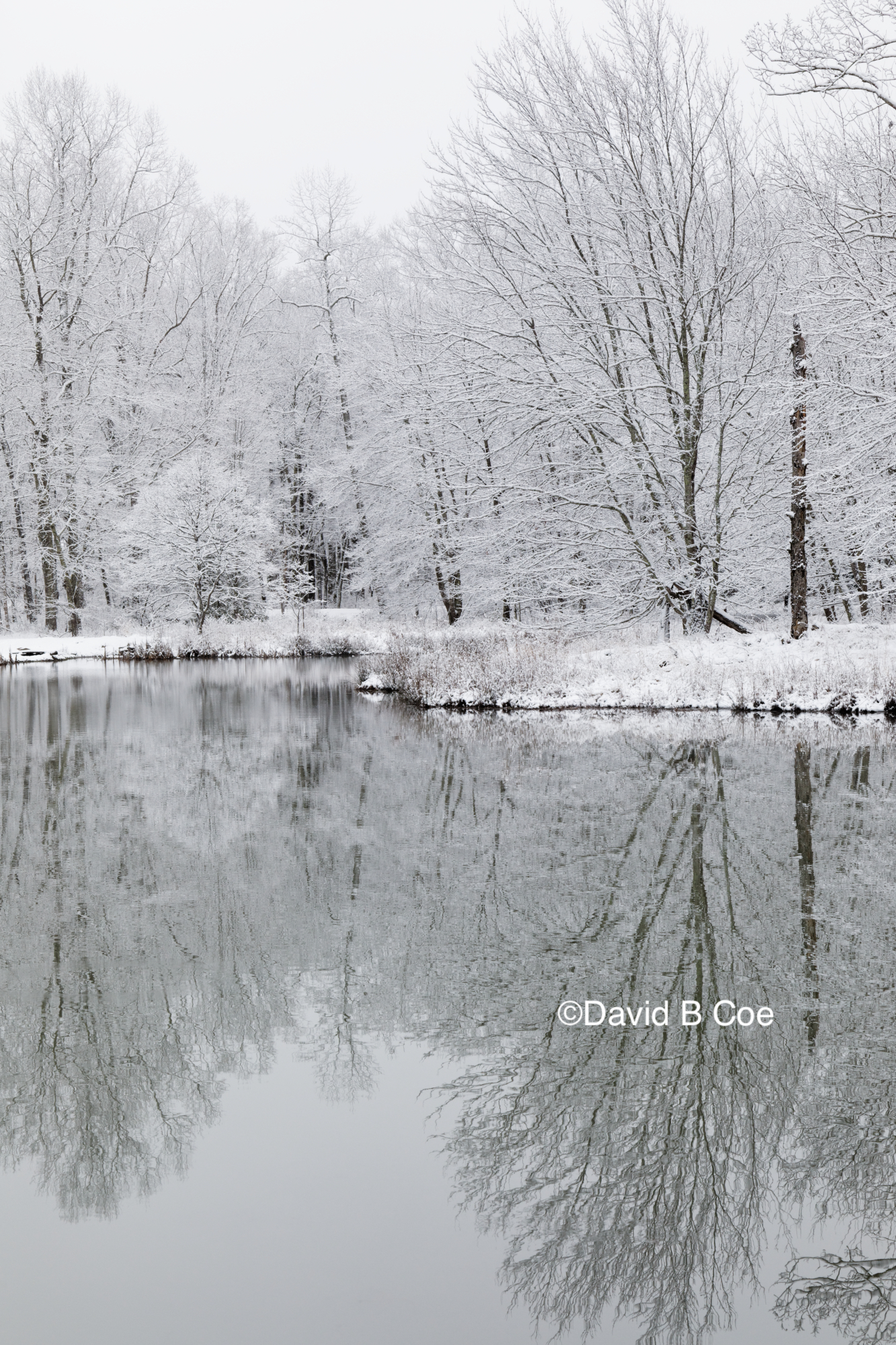 Pond in Snow II, by David B. Coe