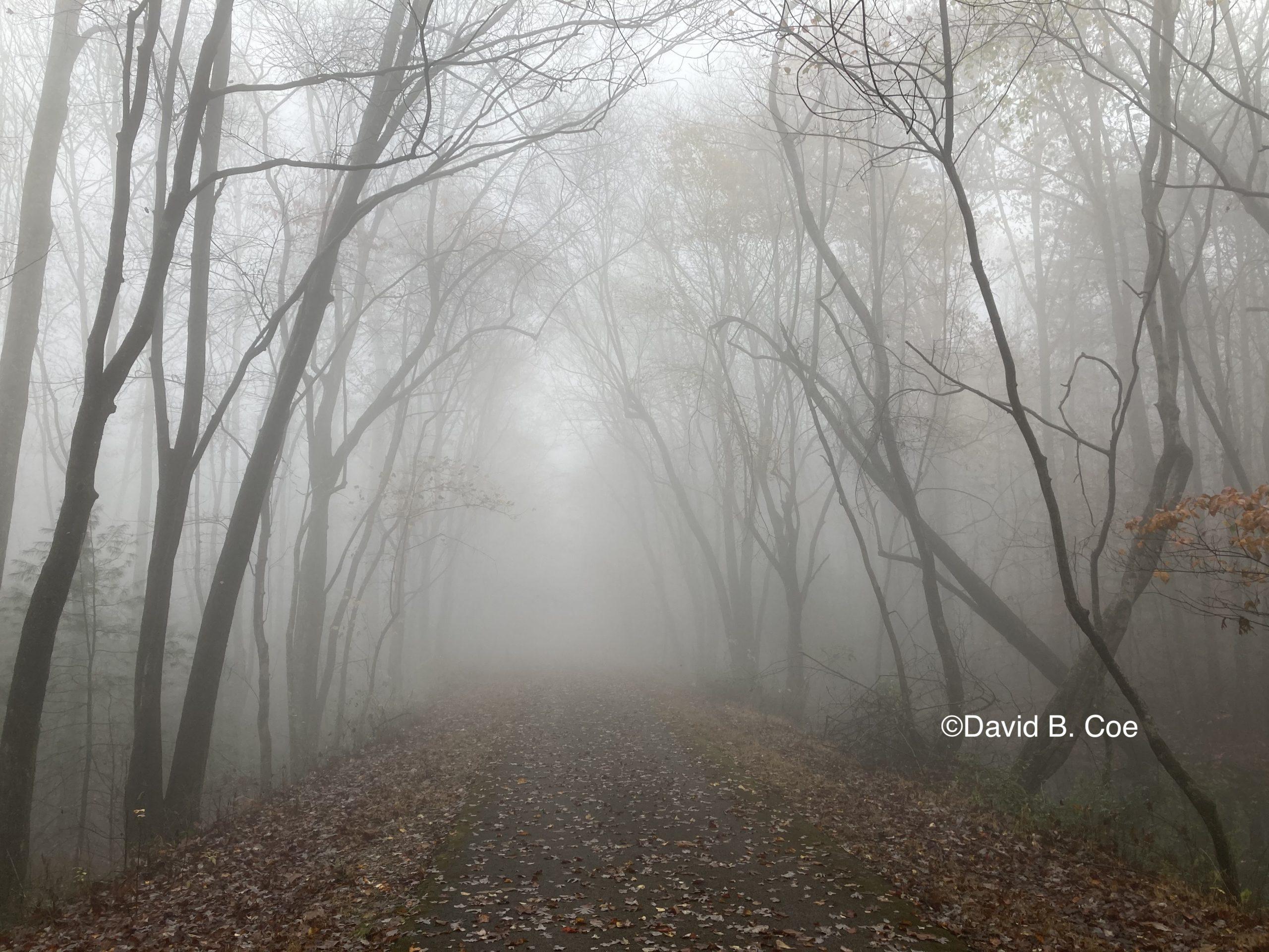 Foggy Path, by David B. Coe