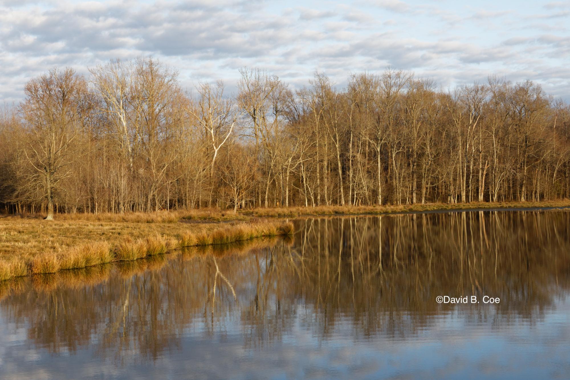 Farm Pond Reflection, by David B. Coe
