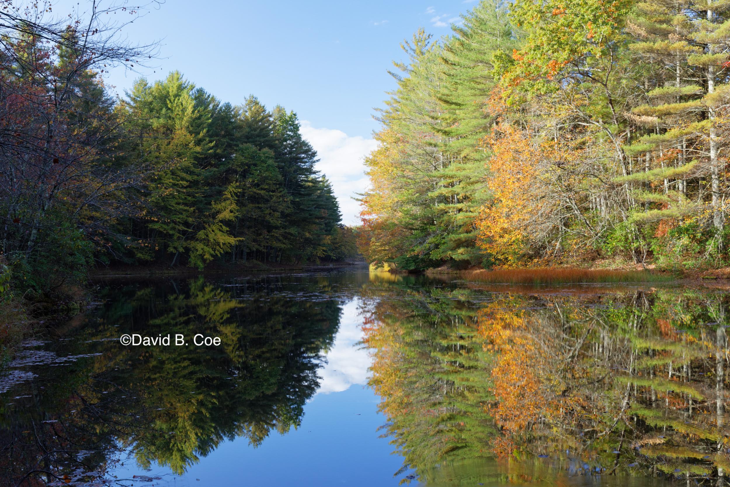 Foliage Reflections, Jackson Lake, by David B. Coe