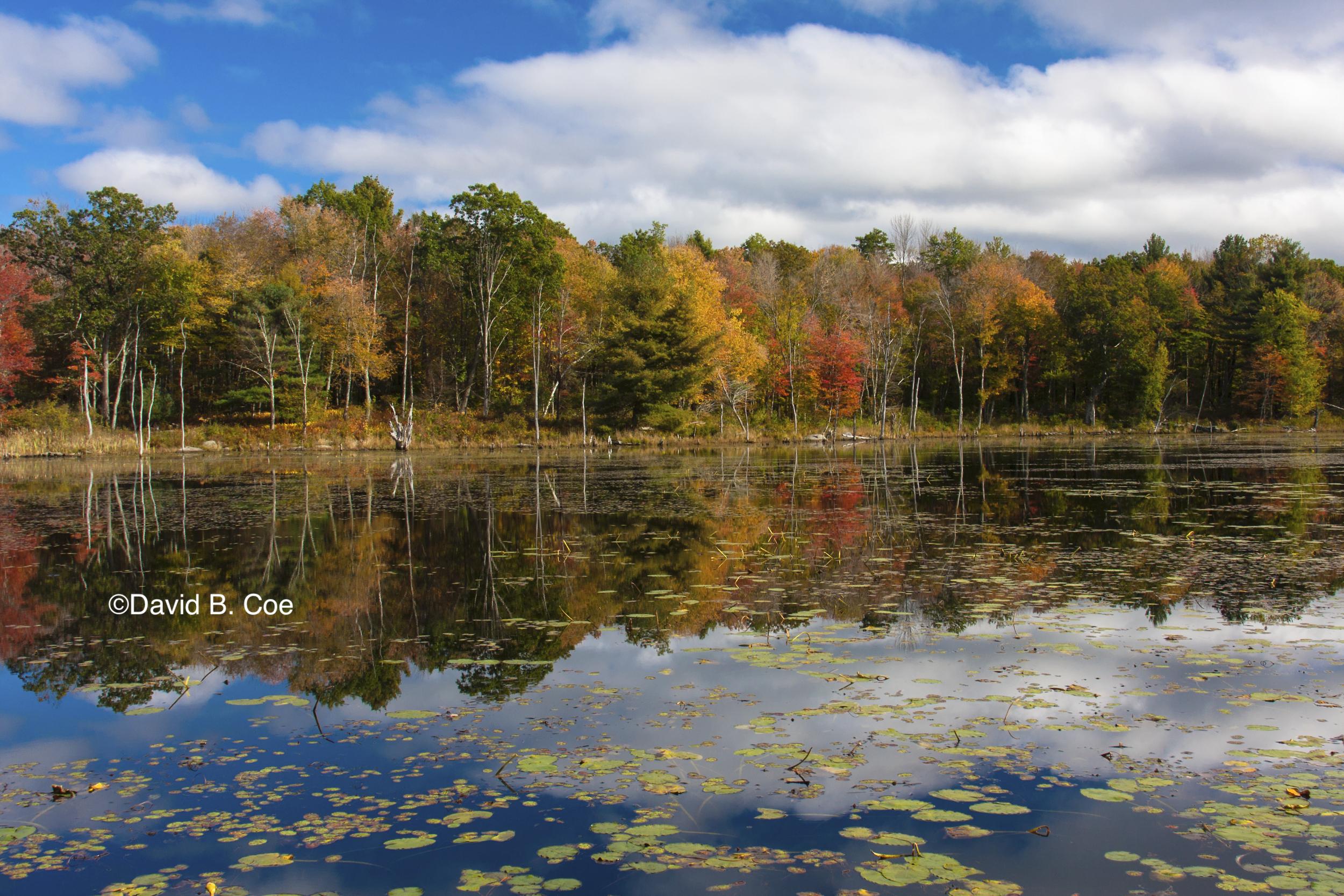 Wachusett Meadow Fall, by David B. Coe