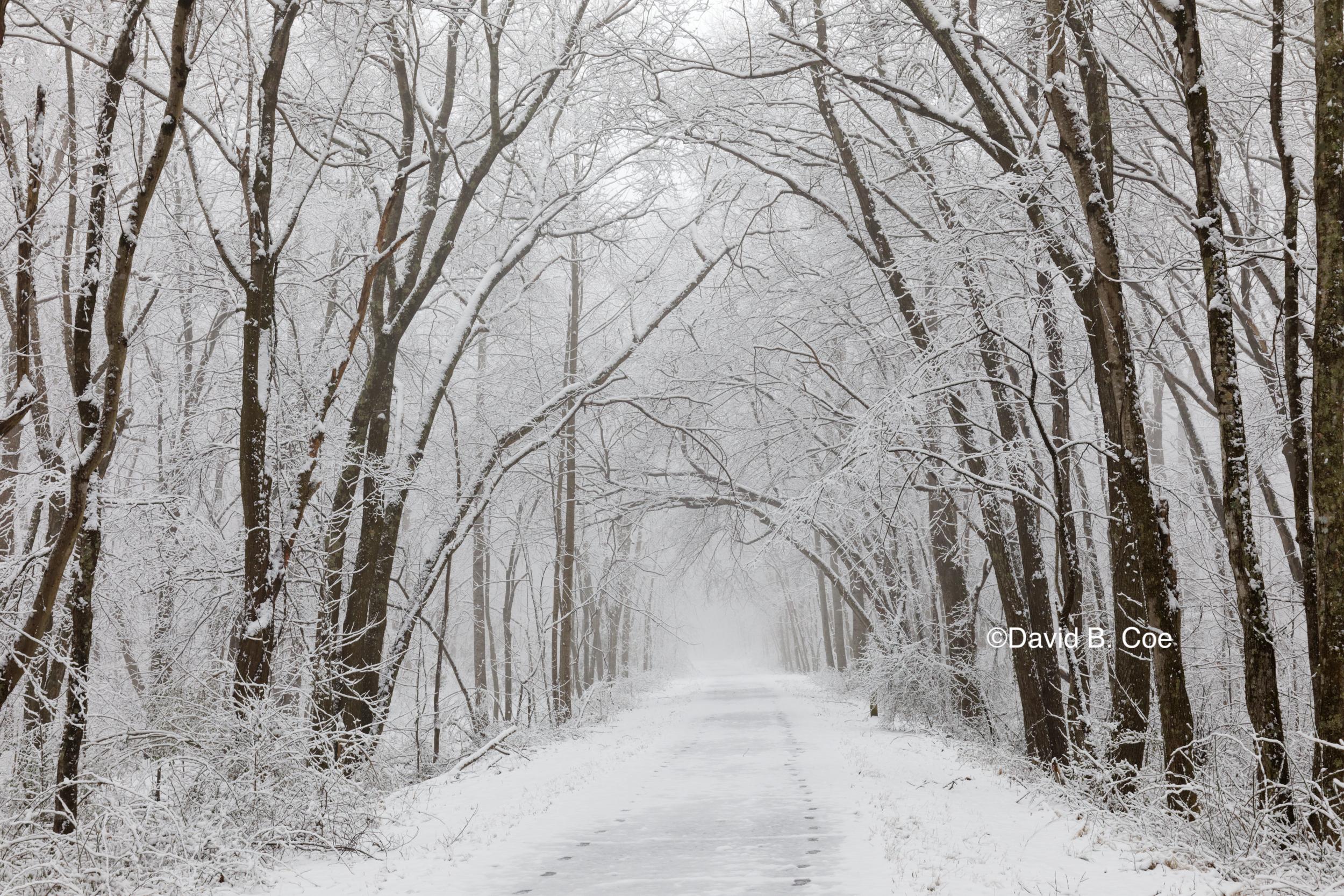 Trail Snowfall I, by David B. Coe