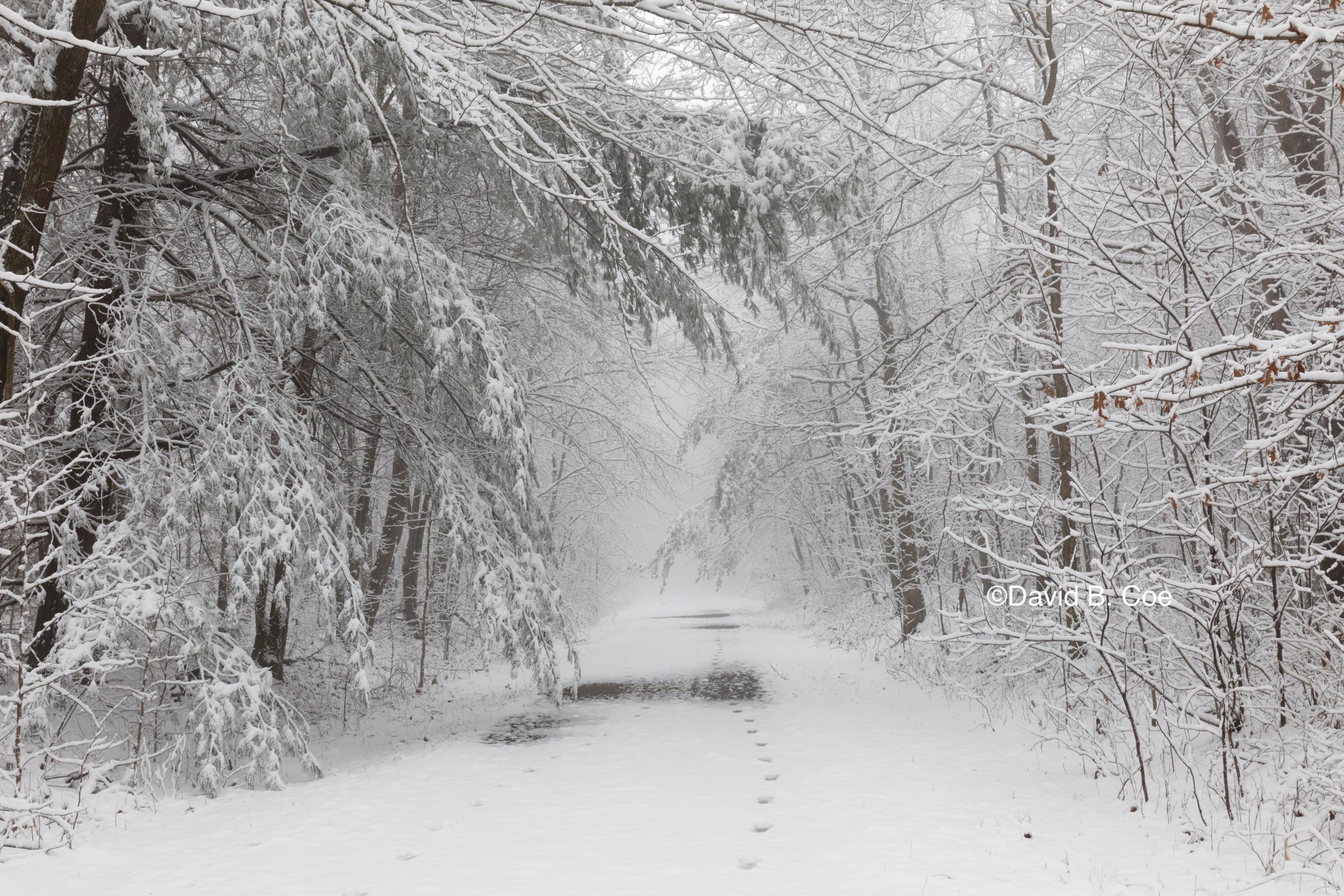 Trail Snowfall II, by David B. Coe