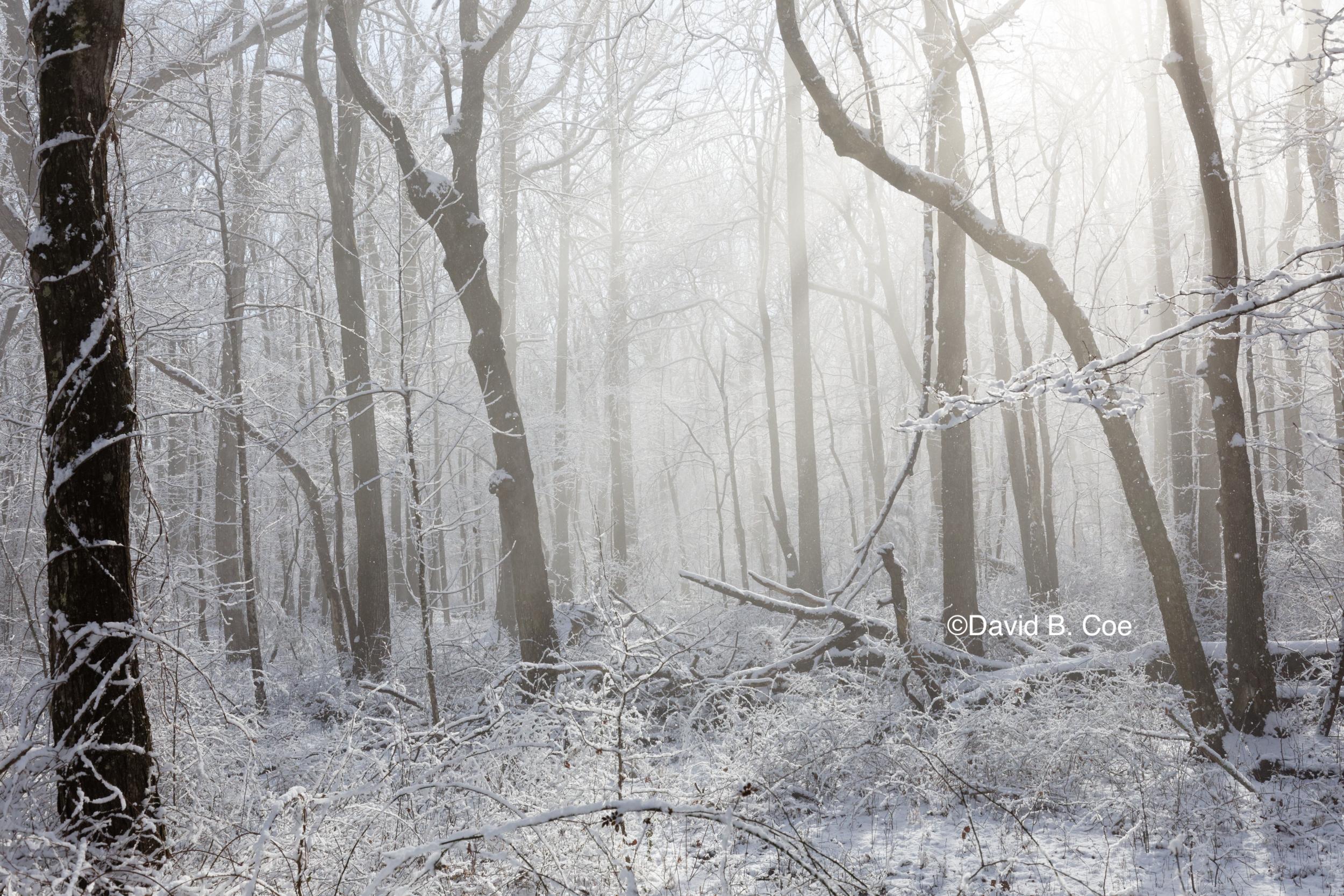 Snow and Mist II, by David B. Coe